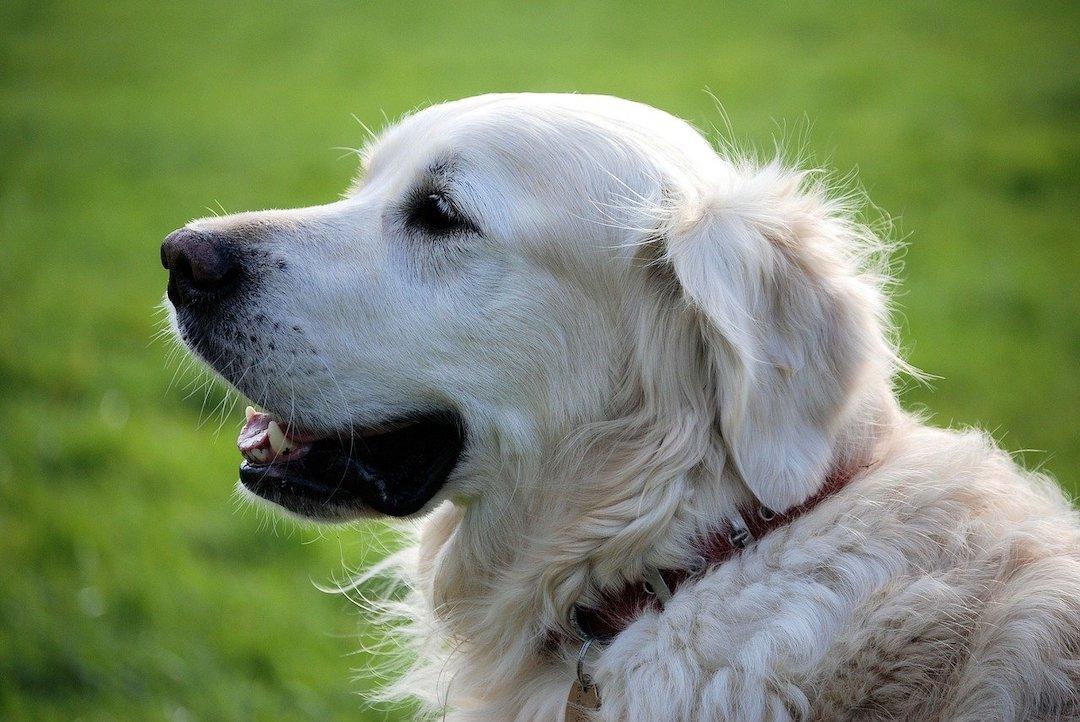 Chiens visiteurs de l'Amicale Canine d'Aubenas
